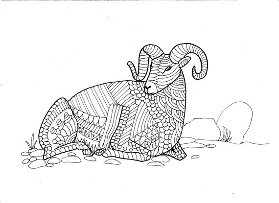 Bighorn Sheep Colouring Page, digital product, digital download, adult colouring, art and collectables, drawing and illustration, wild sheep