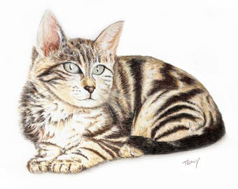 Tabby Cat Portrait in Colored Pencil