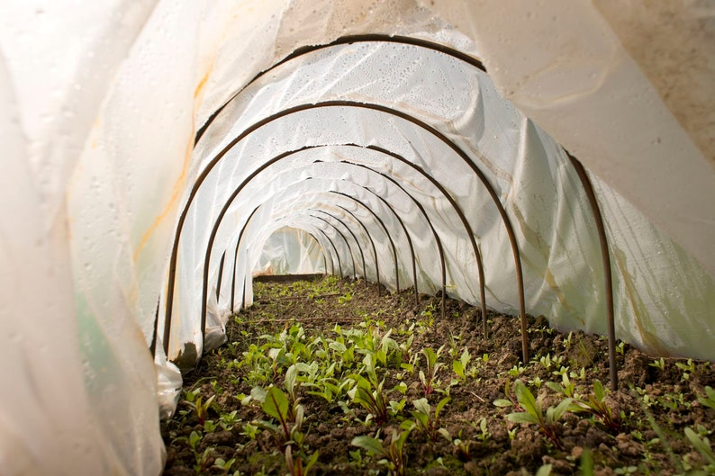 Tunnel arches, greenhouse, garden shed, early bed, vegetable patch, herbs,  vegetables, salad, flower, breeding house, garden, plants, reproduction,