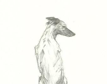 Original Sketch of a Greyhound. Graphite.