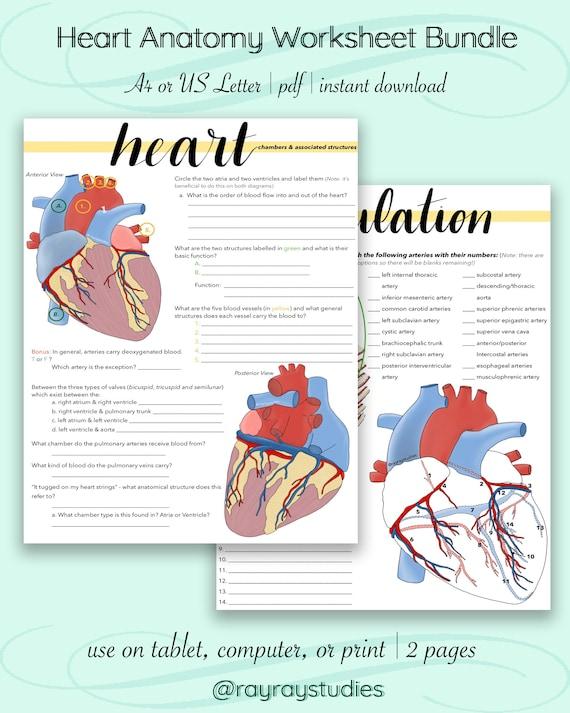 30 Label The Heart Worksheet - Label Design Ideas 2020