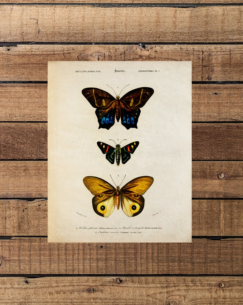 Vintage Butterfly Chart PrintButterfly GiftsButterfly Wall ...  Vintage Butterfly Chart