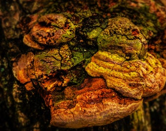 "16x20"" Tree Macro Texture Natural Photography Print on Acrylic Canvas"