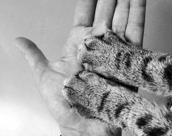 Reiki treatment for animals