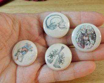 "1"" Anatomy Buttons Sets, 4 pc (pins pinback anatomical bones skull medical oddities brain keychain steampunk antique human gift stocking"