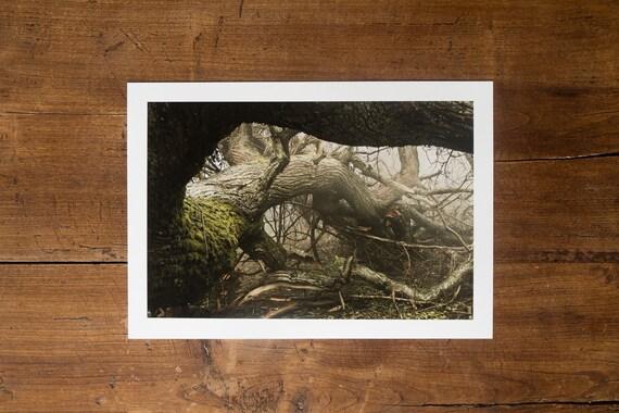 Man-made Disaster - Fine Art Print