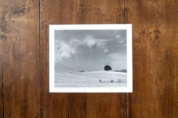Lonesome Tree - Study n. 1 - Fine Art Print