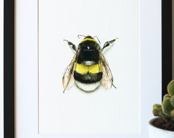 Bumble Bee print | Giclée, A4 Print, Watercolour, Black, Yellow, Entomology, Insect.