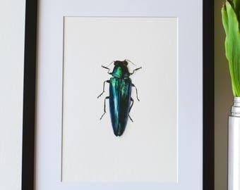 Beetle print | Giclée, A4 Print, Watercolour, Green, Blue, Entomology, Insect Print.