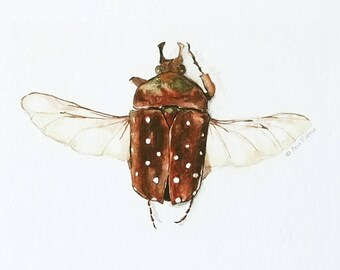 Beetle print   |  Giclée, A4 Print, Watercolour, Spots, Brown, Wings, Entomology, Insect print