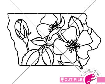 Iowa Wild Rose State Flower Silhouette Watercolor Print