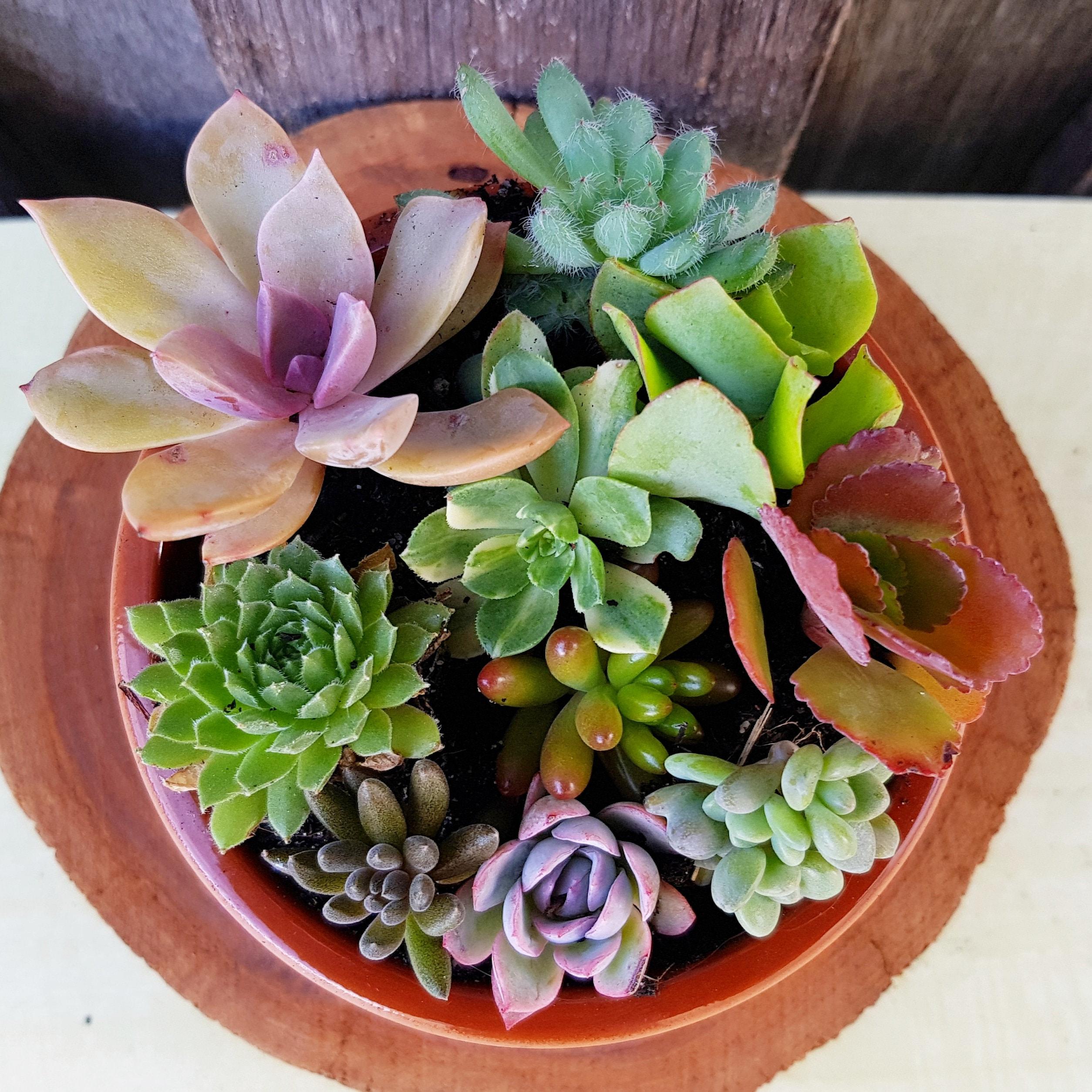 Sold By Flowerandtwignursery