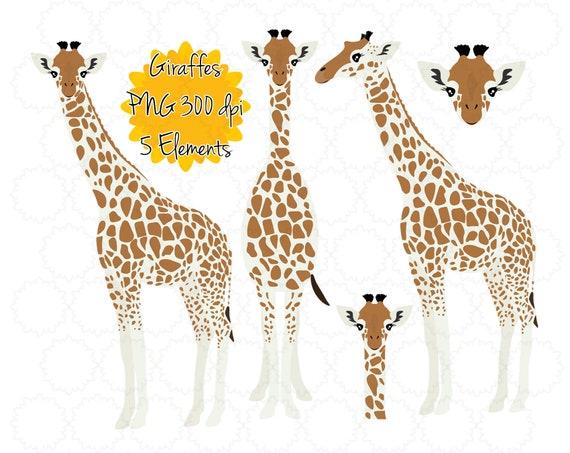 graphic regarding Giraffe Printable named Giraffe Clipart Giraffe Graphics Giraffe Printable Instantaneous Down load  Giraffe png Giraffe Clip Artwork Zoo Animal Wild Animal png