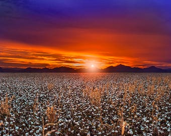 sunset over cottonfield