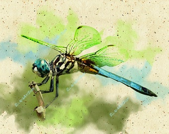 Dragonfly on the transparent layer in watercolor style. Clipart. Swiftness and speed, beauty and danger.