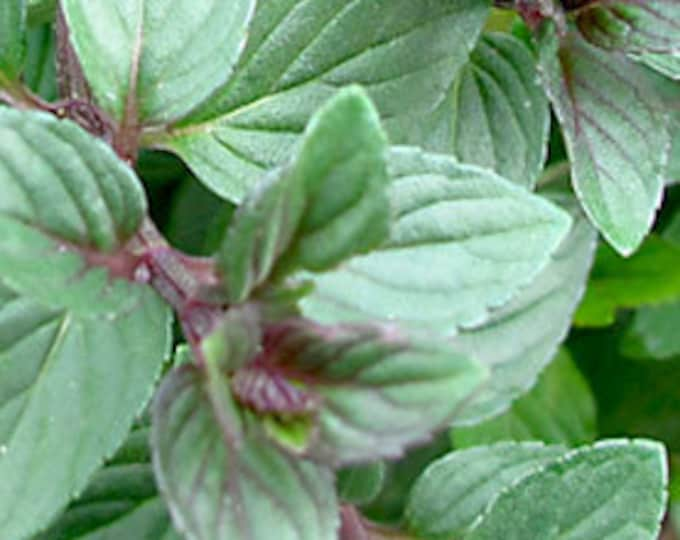 "organic chocolate  mint (rooted) plant  - 1 count 4""- 6"" long Grown in the U.S.A."