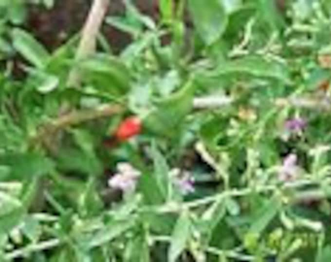 """ORGANIC GOJI BERRY plant((sweet lifeberry) (cuttings) 5 yr old 6-8"""" lg  4 count"""