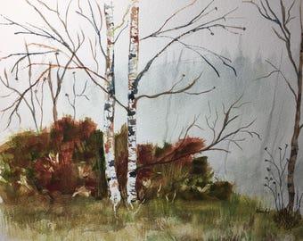 Birch trees landscape