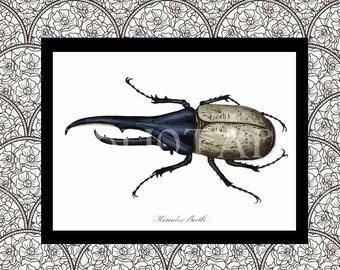 Digital Art - Antique Art - Hercules Beetle - Beetle Art - Insect Print - Entomology - Entomologist  Book Plate - Antique Book Art
