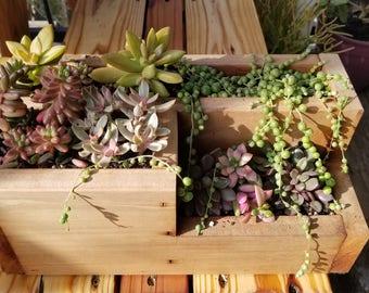 Compact planter