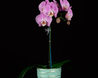 Orchid Photograph, Flower Wall Art, Botanical Photography, Still Life Photography