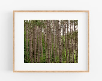 Trees, Nature Photography