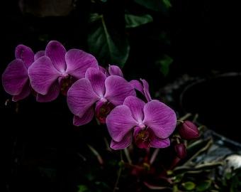 Orchid Photograph, Flower Wall Art, Botanical Photography