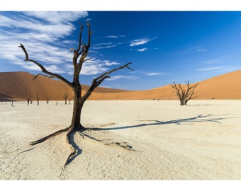 Photograph of camel thorn trees at Dead Vlei, Sossusvlei, Namibia - Fine art archival photographic print by Steve Davey