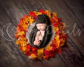 Colorful newborn digital backdrop with maple leaf bowl and wooden background, Autumn themed digital photography background for boy and girl