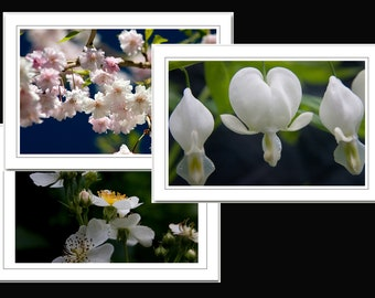Set of 3 Photo note cards