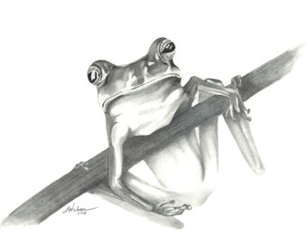 Tree Frog - Pencil drawing print, fine art print, wall art, home decor