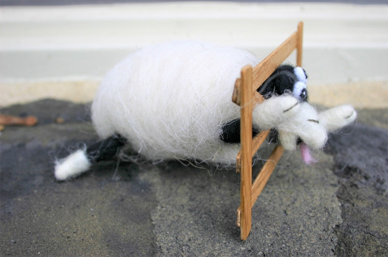 Silly Sheep with his Head Stuck!