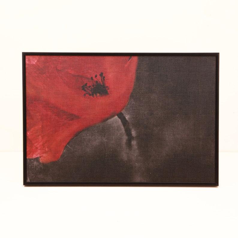 Poppy image 0