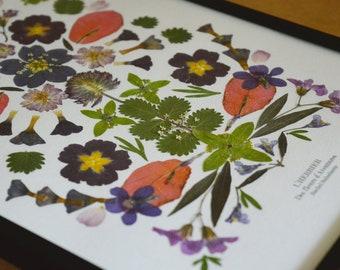 The Herbarium of Adventures 27 Flowers