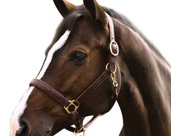 Noseband etsy brand new triple stitched halter with fancy stitched noseband padded nb cheeks and crown maxwellsz