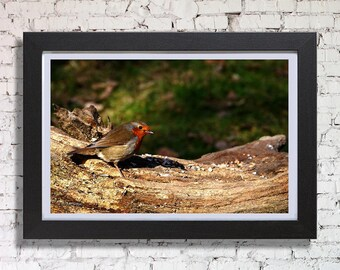 Robin Red Breast Framed Print, By Peter Bowers
