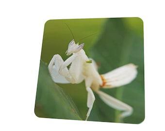 orchid praying mantis Hymenopus coronatus insect keeper gift wooden coaster 9cm