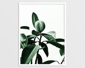 Ficus Print, Green Leaves Poster, Modern Print, Scandinavian, Plant Poster, Bohemian Style, Botanical Wall Art, Tropical Decor, Nordic Home
