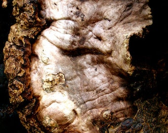 nature photography, green man, tree man, tree photography, trees, dryad, mythical creature, mythology