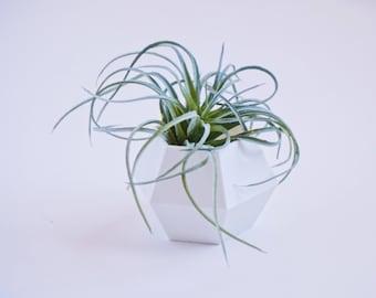 White Geometric Plant Pot / 3D Printed / Air Plants / Succulents / Planter / Home Plant / Indoor Plant
