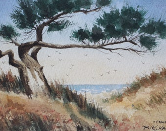 California Beach Tree