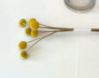 Craspedia - Yellow - Dried Flowers - Bulk