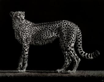 Cheetah Art Print   Big Cat   Scratchboard Fine Art Print   Wildlife & African Decor