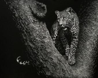Leopard   Scratchboard Fine Art Print   Wildlife Decor