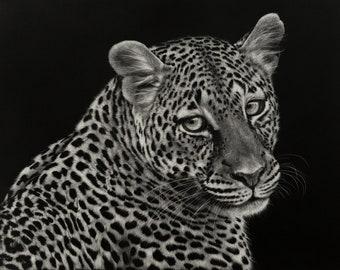Leopard Art Print   Wildlife   Scratchboard Fine Art Print   Wildlife & African Decor