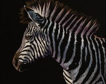 Colorful Zebra Art Print   Scratchboard Fine Art Print   Wildlife Decor