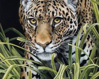 South American Jaguar Art Print   Scratchboard Fine Art Print   Wildlife Decor