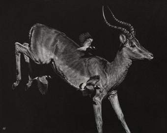 Impala Antelope Art Print   Scratchboard Fine Art Print   Black and White   African and Wildlife Decor