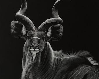 Kudu Art Print   Antelope   Scratchboard Fine Art Print   Wildlife & African Decor