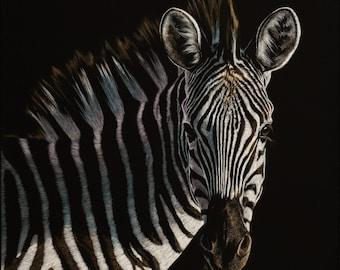 Zebra Art Print   Scratchboard Fine Art Print   Wildlife Decor